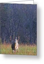 Buck In The Rut Greeting Card