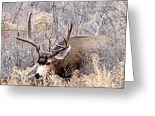 Buck In The Rutt Greeting Card