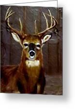 Buck On Slate  Greeting Card