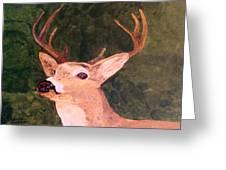 Buck Portrait Greeting Card