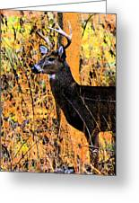 Buck Scouting For Doe Greeting Card