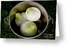 Bucket Of Onions Greeting Card by Wilma  Birdwell