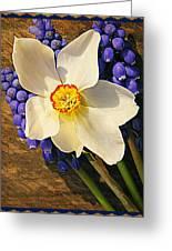 Buckeye And Grape Hyacinth Greeting Card