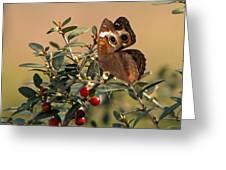 Buckeye Beauty Greeting Card