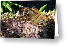 Buckeye Butterfly On Sedum Greeting Card