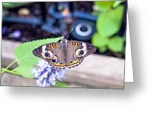 Buckeye I Greeting Card