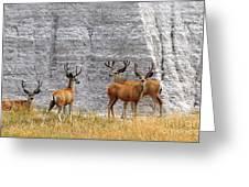 Bucks Abound Greeting Card