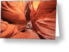 Buckskin Bulge Greeting Card