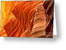Buckskin Fiery Orange Greeting Card
