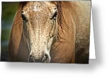 Buckskin Stallion Greeting Card