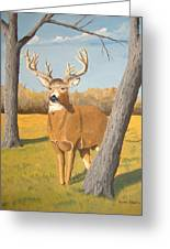 Bucky The Deer Greeting Card
