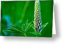 Bud And Leaf Of A Lupin Greeting Card