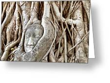Buddha Head In Tree Wat Mahathat Ayutthaya  Thailand Greeting Card by Fototrav Print