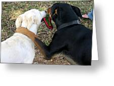 Buddies Sharing Greeting Card
