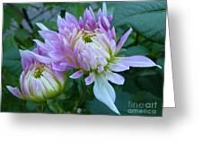 Budding Beauties Greeting Card