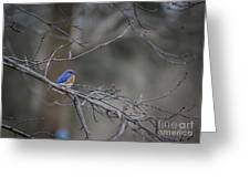 Budding Bluebird Greeting Card