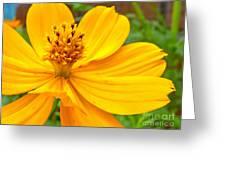 Budding Bouquet Greeting Card