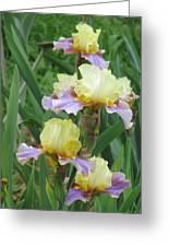 Budding Iris Greeting Card