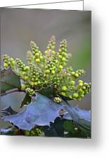 Budding Mahonia Greeting Card