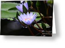 Budding Purple Water Lilies Greeting Card