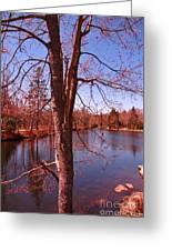 Budding Spring Tree Greeting Card