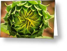 Budding Sunflower Greeting Card