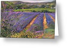 Buddleia And Lavender Field Montclus Greeting Card