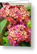 Buddleja Sp. Plant In Flower Greeting Card