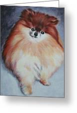Buddy - Pomeranian Greeting Card