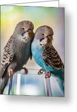 Budgerigars Greeting Card