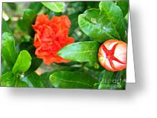 Buds And Frills Greeting Card