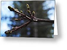 Buds Of Spring Greeting Card by Michael Sokalski