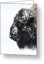 Buffalo   #0164 Greeting Card