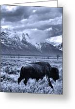 Buffalo And Mountain In Jackson Hole Greeting Card