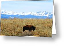 Buffalo And The Rocky Mountains Greeting Card