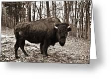 Buffalo Bill Greeting Card