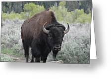 Buffalo Bird Greeting Card