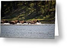 Buffalo Crossing - Yellowstone National Park - Wyoming Greeting Card