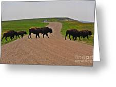 Buffalo Crossing Greeting Card