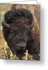 Buffalo Head Greeting Card