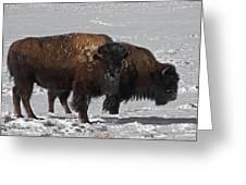 Buffalo In Snow Greeting Card