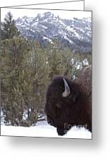 Buffalo In The Mountain   #4169 Greeting Card