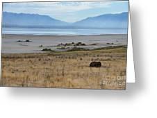 Buffalo Of Antelope Island V Greeting Card