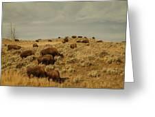 Buffalo On The Prairie Greeting Card