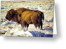 Buffalo Painting Greeting Card