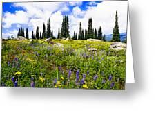 Buffalo Pass Colorado Wildflowers Greeting Card