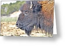 Buffalo Tongue Greeting Card