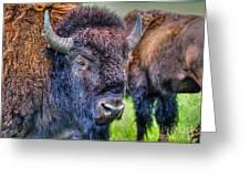 Buffalo Warrior Greeting Card by Skye Ryan-Evans