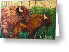 Buffaloes Greeting Card