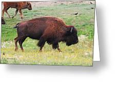 Buffalo Mom Greeting Card